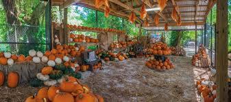 Pumpkin Patch Coconut Grove Groupon by Pinto U0027s Farm Pumpkin Patch Florida Haunted Houses