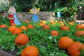 Linus Great Pumpkin Image by Riverwalk Cafe Des Moines Water Works