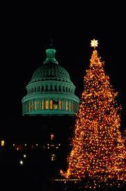 Christmas Tree Species Canada by Best 25 Balsam Fir Tree Ideas On Pinterest Fir Cones Noble Fir