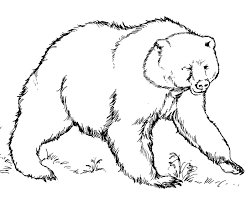 Grizzly Bear Coloring Page Free Printable Pages For Kids Book