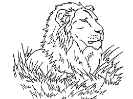 Printable 24 Realistic Lion Coloring Pages 7502