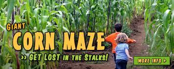 Corn Maze Pumpkin Patch Winston Salem Nc by Find Corn Mazes In Fuguay Varina North Carolina Naylor Family