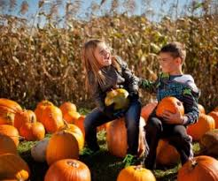 Jacksonville Nc Pumpkin Patch by Massachusetts Corn Mazes And Festivals