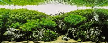 Aquascape Series | [T A G] Aquascaping Nature Aquariums Of Zoobotanica 2013 Youtube Aquascape The Month November 2009 Riverbank Aquascaping Style Part 5 Roots By Papanikolas Nikos Awards Aquascapes Lab Tutorial River Bottom Natural Aquarium Plants The Planted Tank 40 Gallon Aquarium Everything About Incredible Undwater Art Cube Tanks Aquariums Dutch Vs How To A Low Tech Part 1