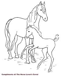 Horse And Colt Coloring Pages