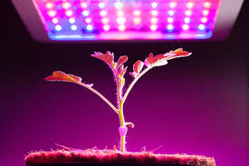 Grow Lamps For House Plants by Best Led Grow Lights Reviews For 2017 By Experts In Growing