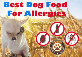 List Of Non Hypoallergenic Dogs by Best Dog Food For Allergies The Guide To Finding The Non