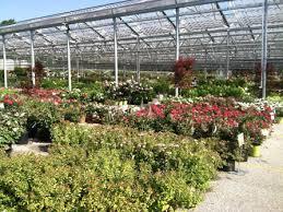 Mentor Petitti Garden Center