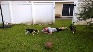 The Beagle Escape - YouTube 100 Dog Escapes Backyard Run Ideas How To Build A To Guide Install Homer The Beagle Capes Home Heads Kids School Determined Cannot Be Fenced Im Not Stalking You Wearing Gopro Camera Jukin Media Annie The Heat Youtube Escape Artist Climbs Fence Creative Country Scenes Coloring Book For Adults Adult Qa More Help Dogfriendly Gardens Sunset Funny Puppy Kennel