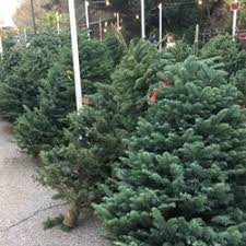 Photo Of Enchanted Forest Christmas Trees