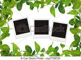 l arbre a cadre feuilles arbre photos vert vide cadre dessin rechercher des