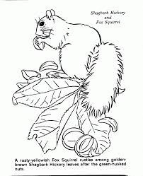 Category Coloring Pages Of Nature Scenes Page 0
