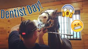 BARN VLOG! Bug Sees The Dentist! // Eastern Equestrian - YouTube Best 25 Dental Ideas On Pinterest Dentistry Assistant Office Design Competion Small Practice Of The Mrs Krsis Preschool Visit From Dentist We Like Barn Door Idea For Checkout Stations Dentologie Stone Barn Meet Staff Clara Harris Murder Trial Pictures Getty Images Renew Barnwood Accents Bgw Cstruction Working Client Oral Mouth Male Checkup 1080 Stock The 74 Best Images About Reception Desks Are You Willing To Improve Your Smile Dentists In Melbourne Cbd 96 Dhg Graduation