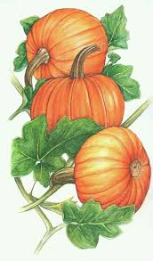 pumpkin vine drawing pin gourd clipart pumpkin vine 13 drawing