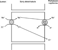 High Ceiling Diuretics Can Cause by Diuretics Veterian Key