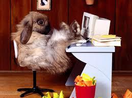 arriere plan de bureau fond d écran de lapin coolos au bureau