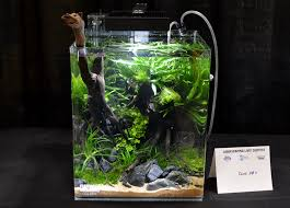 Aquascaping Live! 2016 Small Planted Tanks My Life Story Aquascape Gallery Aquascapes Pinterest Aquascaping Live 2016 Small Planted Tanks The Surreal Submarine World Of Amuse Category Archives Professional Tank Enchanted Forest By Tommy Vestlie Aquarium Design Contest Awards 100 Ideas Aquariums Fish Tanks And Vivarium Avatar Fish Tank Google Search Design Aquascape Ada Aquascaping Contest Homedesignpicturewin Award Wning Amenagementlegocom Legendary Aquarist Takashi Amano Architecture