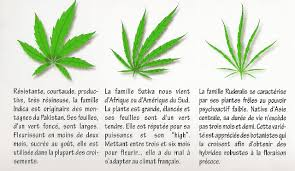 recolte cannabis exterieur date jdc skunk en terre out 5 one bud 11 semaines