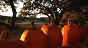 Pumpkin Patch Houston Oil Ranch by Martin Farms Pumpkin Patch Texas Haunted Houses