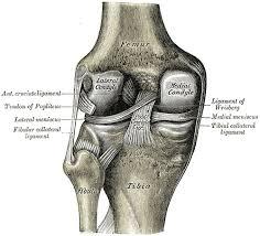 douleur au genou clinique kiné santé