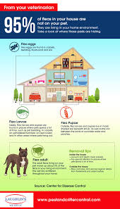 7 Ways To Get Rid Of Fleas And Ticks On Your Minnesota Property In ... How To Kill Fleas And Ticks All Naturally Youtube Keep Away From Your Pet Fixcom Get Rid Of Get Amazoncom Dr Greenpet Natural Flea Tick Prevention Tkicide The Art Getting Ticks In Lawns Teresting Rid Bugs Back Yard Ways Avoid Or Deer Best 25 Mosquito Control Ideas On Pinterest Homemade Mosquito Dogs Fast Way Mole Crickets Treatment Control Guide