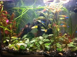 aquarium d eau douce aquarium d eau douce tropicale 50l page 2