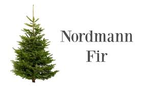 Christmas Trees Types by Finnegan Christmas Trees Northern Ireland