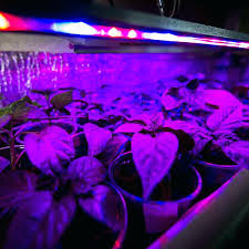 How Much Are Led Grow Lights Lowes – lefulap