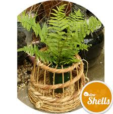 Decorative Lobster Trap Uk by Traditional Lobster Pot Small Online Shells Buy Sea Shells