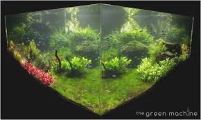 Best Of Aquascapes - Fabuluxedecor | Fabuluxedecor Aquascape Designs For Your Aquarium Room Fniture Ideas Aquascaping Articles Tutorials Videos The Green Machine Blog Of The Month August 2009 Wakrubau Aquascaping World Planted Tank Contest Design Awards Awesome A Moss Experiment Driftwood Sale Mzanita Pieces Two Gardens By Laszlo Kiss Mini Youtube Warsciowestronytop