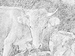 Coloriages De Vaches On Coloriage De Lettre De L Alphabet A Imprimer
