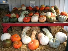 Pumpkin Festival Hamilton Ohio by Spencer Farm