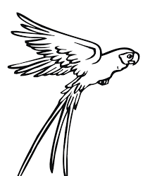 Flying Parrot Bird Coloring Page