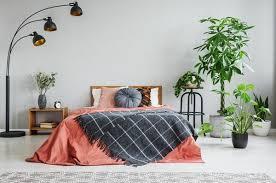 pflanzen im schlafzimmer diese 7 grünen schönheiten