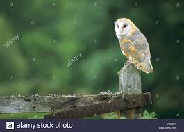 Barn Owl Tyto Alba Perched On Top Of A Gate Post Holing Up A ... Collage Illustrating A Rooster On Top Of Barn Roof Stock Photo Top The Rock Branson Mo Restaurant Arnies Barn Horse Weather Vane On Of Image 36921867 Owl Captive Taken In Profile Looking At Camera Perched Allstate Tour West 2017iowa Foundation 83 Clip Art Free Clipart White Wedding Brianna Jeff Kristen Vota Photography Windcock 374120752 Shutterstock Weathervane Cupola Old Royalty 75 Gibbet Hill