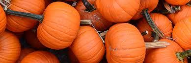 Chatfield Pumpkin Patch Hours by Harvest Fest Queens Botanical Garden