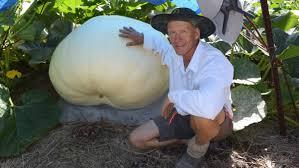 Organic Pumpkin Seeds Australia by Heaviest Pumpkin Akin To The Holy Grail The Land