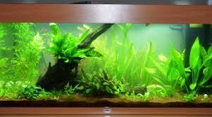 ph aquarium eau douce ph kh et gh pour néons et nez