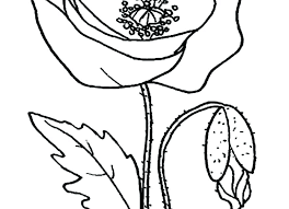 Lightning Bolt Coloring Pages Page Dragon