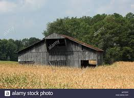 Old Wooden Barn In The Middle Of A Corn Field Tennesse USA Stock ... Pin By Cory Sawyer On Make It Home Pinterest Abandoned Cars In Barns Us 2016 Old Vintage Rusty A Gathering Place Indiego Red Barn The Countryside Near Keene New Hampshire Usa Stock The Barn Journal Official Blog Of National Alliance Classic Sesame Street In Bq Youtube Weathered Tobacco Countryside Kentucky Photo Fashion Rain Boots Sloggers Waterproof Comfortable And Fun Red Wallowa Valley Northeast Oregon Wheat Fields Palouse Washington