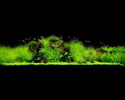 Wallpaper Of My 4 Footer. The Green Machine Aquascaping Shop Aquarium Plants Supplies Photo Collection Aquascape 219 Wallpaper F Amp 252r Of The Month October 2009 Little Hill Wallpapers Aquarium Beautify Your Home With Unique Designs Design Layout New Suitable Plants Aquariums Pinterest Pics Truly Inspired Kinds Ornamental Aquascaping Martino Agostini Timelapse Larbre En Mousse Hd Youtube Beauty Of Inside Water Garden Inspirationseekcom Grass Flowers Beautiful Background