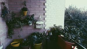 GiadaJadeFratti On Twitter My Balcony F4f Instalike Tumblr Grunge Love Instagood Picoftheday Nature Plant Flowers Vintage Photos