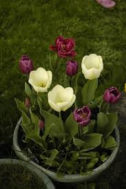 can you store bulbs in containers tips for storing flower bulbs