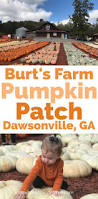 Seattle Pumpkin Patch For Adults by Best 25 Pictures Of Pumpkins Ideas On Pinterest October