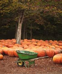 Half Moon Bay Pumpkin Patches 2015 by 130 Best Pumpkin Patch Images On Pinterest Fall Halloween