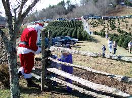 Christmas Tree Baler Netting by Nc Choose U0026 Cut Tree Farm Faq