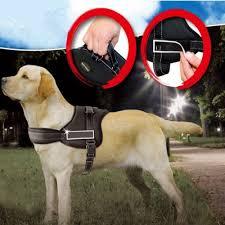 Do Samoyed Huskies Shed by Amazon Com Ecoastal Dog Body Harness Padded Extra Chest Straps