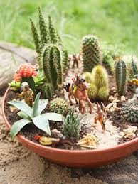Pot Plants For The Bathroom by How To Plant A Cactus Container Garden Hgtv