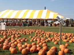 Pumpkin Patches Near Colorado Springs Co by 15 Best Pumpkin Picking Oklahoma Agritourism Images On Pinterest