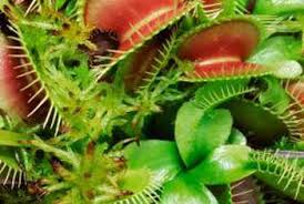 how to set up artificial lights for a venus flytrap home guides